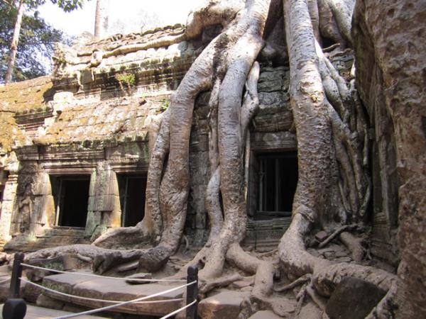 Des racines plus grosses que nature