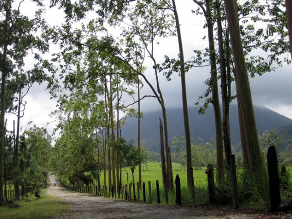 Volcan Arenal au travers des Eucalyptus