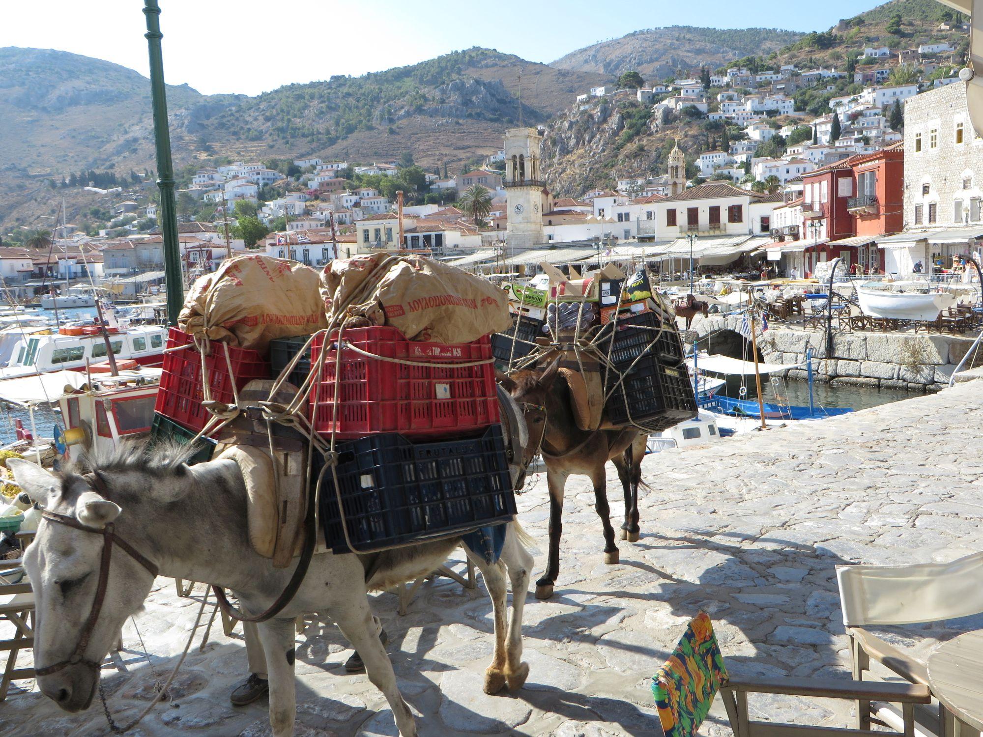 Des ânes chargés de victuailles, au port de Hydra ( île sans voiture) !