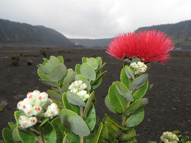 Kilauea Iki Trail, randonnée dans un cratère de volcan