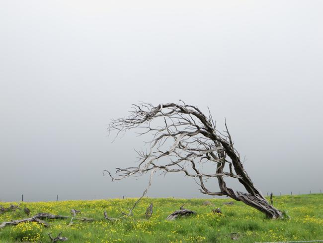 Nature volcanique, Big Island