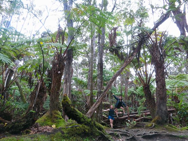 Forêt tropicale hawaïenne, aux abords d'un volcan