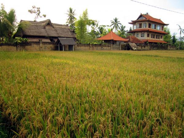Bali et ses rizières en fin de journée